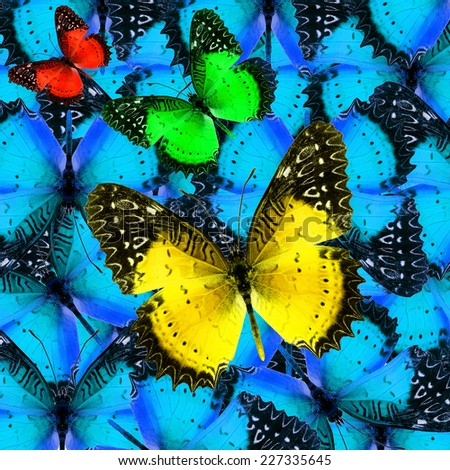 Butterfly,Beautiful abstract background texture made from colorful butterfly - stock photo