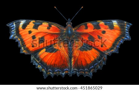 Butterfly. Black background. Aglais urticae. Nymphalis urticae. Colored pencil drawing Butterfly. Classicdrawing Butterfly. Detailed drawing Butterfly Aglais. - stock photo