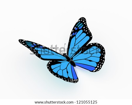 Butterfly blue color isolated on white background - stock photo