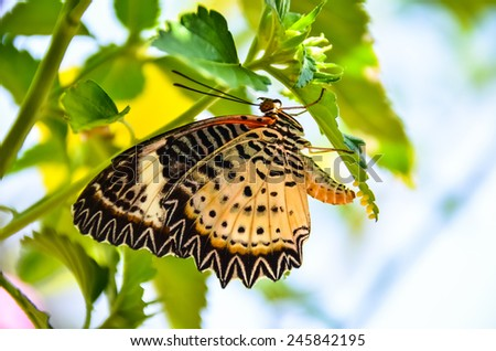 Butterfly Breeding, Butterfly egg on green leaf - stock photo