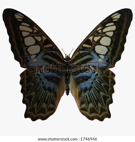 Butterfly-Clipper - stock photo