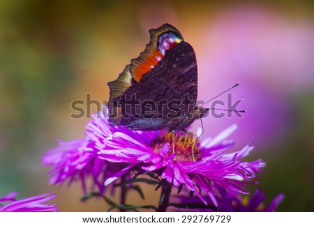 Butterfly closeup on a wild flower. Summer nature background. Filtered image: colorful effect.