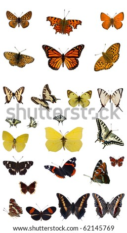 Butterfly collection - stock photo