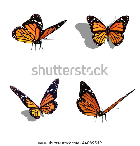 butterfly collection, different views - stock photo