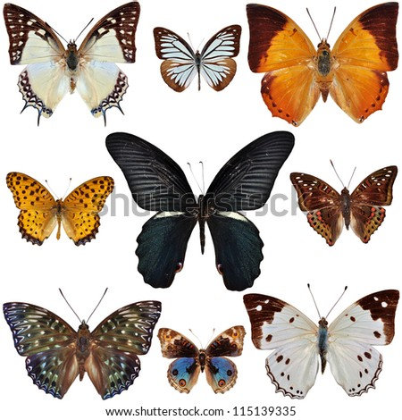 Butterfly Collection isolated on white - stock photo