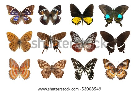 butterfly collection set isolated in white background