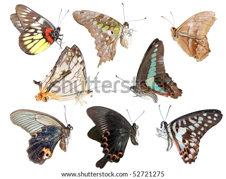 butterfly collection side view isolated in white background. - stock photo