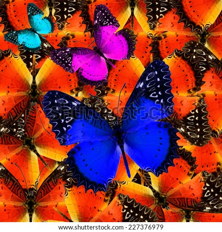 Butterfly,compilation of beautiful abstract background texture made from colorful butterfly - stock photo