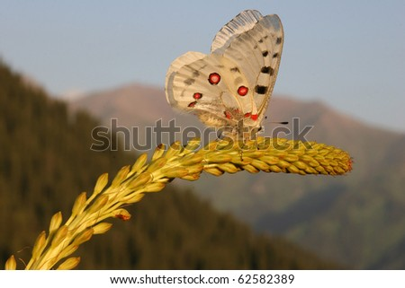 butterfly crawling on a flower - stock photo