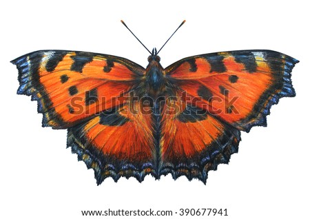 Butterfly drawings. Aglais urticae. Nymphalis urticae. Colored pencil drawing Butterfly. Classic drawing Butterfly. Detailed drawing Butterfly Aglais.