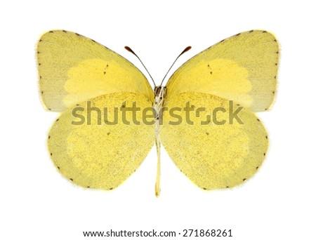 Butterfly Eurema brigitta (female) (underside) on a white background - stock photo