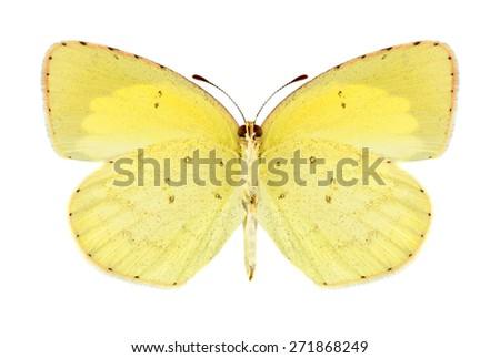 Butterfly Eurema brigitta (male) (underside) on a white background - stock photo