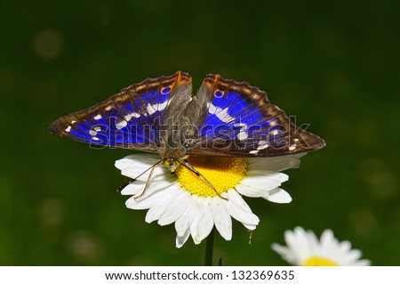 Butterfly feeding at Leaming Gardens - stock photo