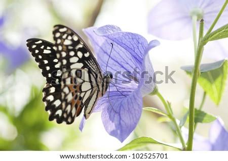 butterfly feeding on a flower - stock photo
