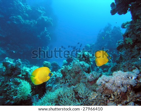 Butterfly Fish on the reef - stock photo