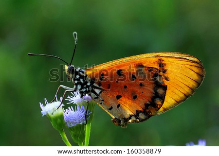 Butterfly  fly in nature