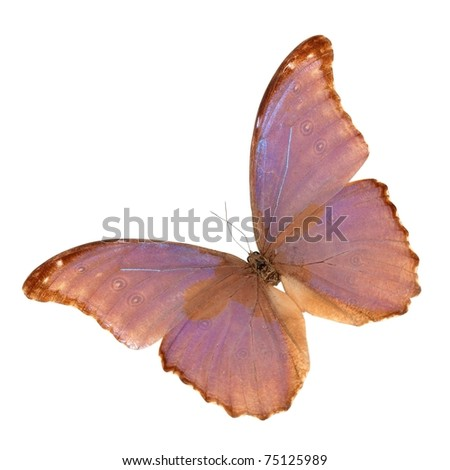 butterfly flying - stock photo