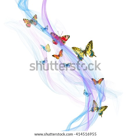 butterfly flying against the backdrop of a transparent silk fabric  - stock photo