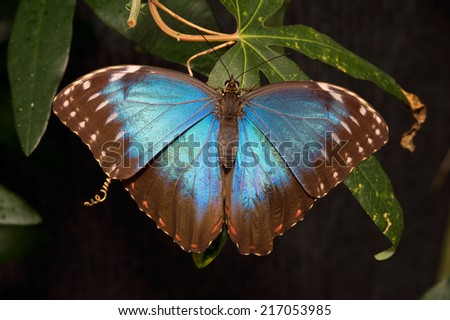 Butterfly from Costa Rica - stock photo
