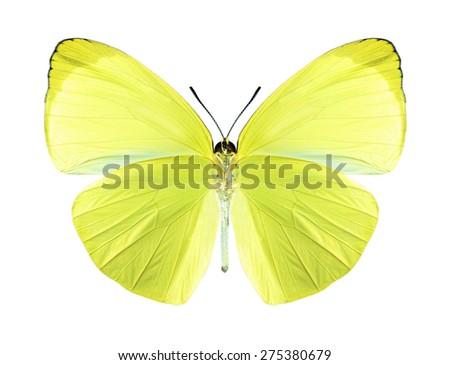 Butterfly Gandaca harina (male) (underside) on a white background - stock photo