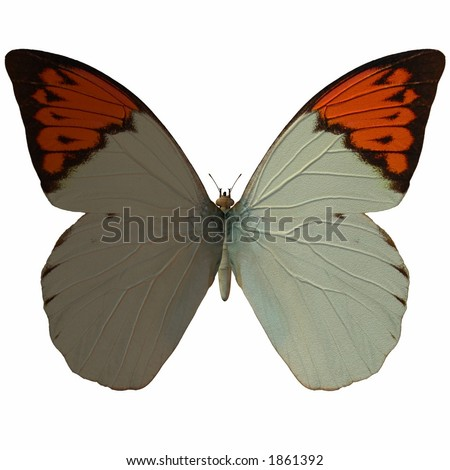 Butterfly-Great Orange Tip - stock photo