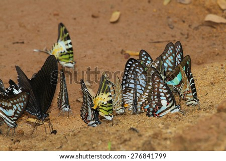 butterfly group in forest thailand - stock photo