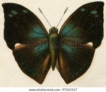 """butterfly imitating the leaves of trees  - an illustration t article """"Mimicry"""" of the encyclopedia publishers Education, St. Petersburg, Russian Empire, 1896 - stock photo"""