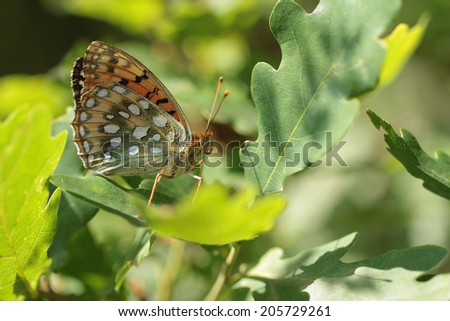 Butterfly in forest
