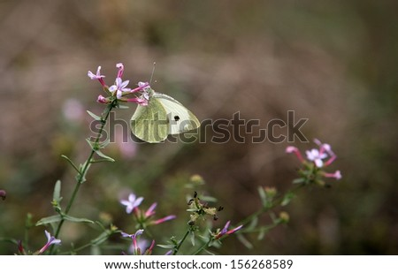 Butterfly in the field - stock photo