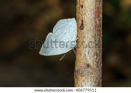 Butterfly, insect, animal, nature. - stock photo