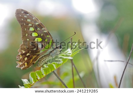 butterfly is staying on the fern leaf - stock photo