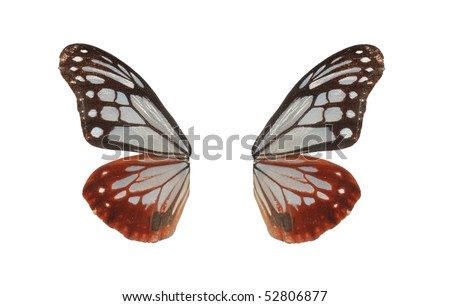 butterfly isolated in white background - stock photo