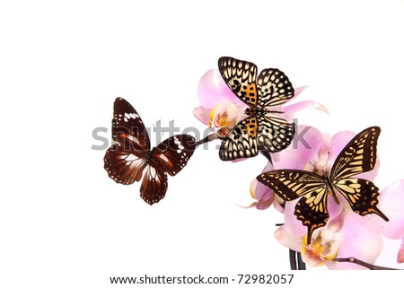 Butterfly  isolated on white - stock photo
