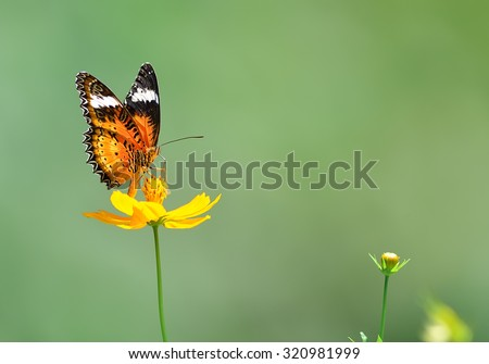 Butterfly (Leopard Lacewing) and flower in nature - stock photo