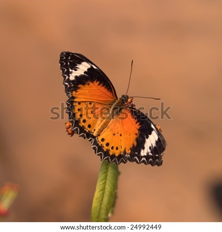 Butterfly Macro - stock photo