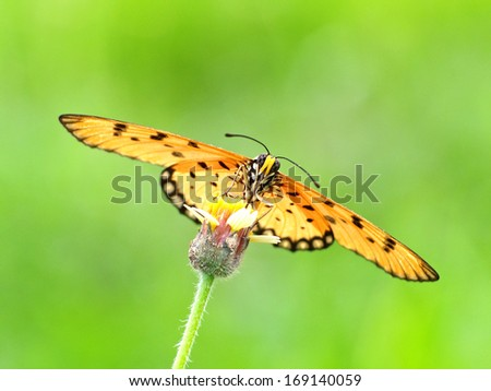 butterfly nectar on  flower grass