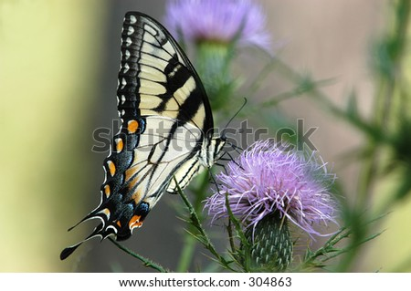 Butterfly No6 - stock photo