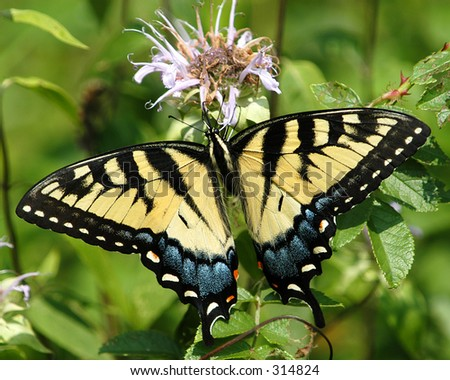 Butterfly No3 - stock photo