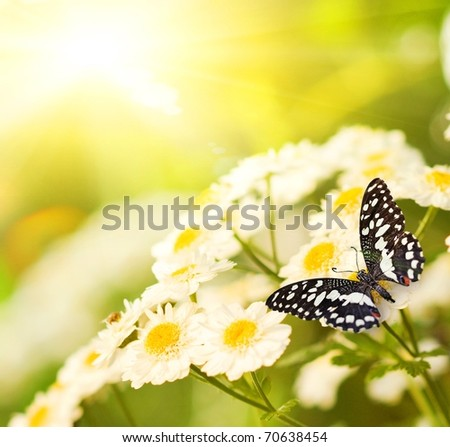 Butterfly on a camomile field - stock photo