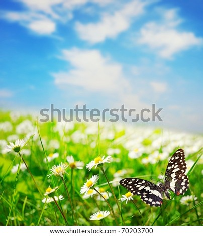 Butterfly on a daisy field - stock photo