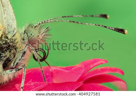 Butterfly on a flower, extreme closeup - stock photo