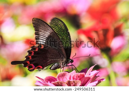 Butterfly on a Flower for adv or others purpose use - stock photo