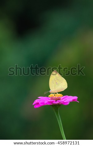 butterfly on a  flower in the flower field