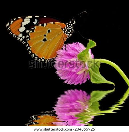 Butterfly on a flower.reflection in water.
