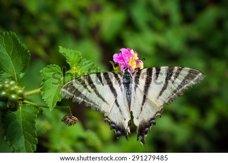 Butterfly on a flower with green leaves in a background - stock photo