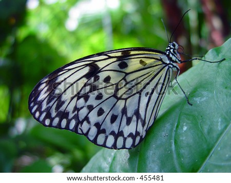 Butterfly on a green leaf - stock photo