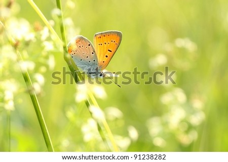 Butterfly on a spring meadow in the sunshine. - stock photo