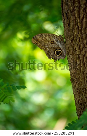 Butterfly on a tree with a natural background