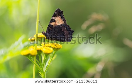 Butterfly on a yellow flower on a background of foliage. - stock photo