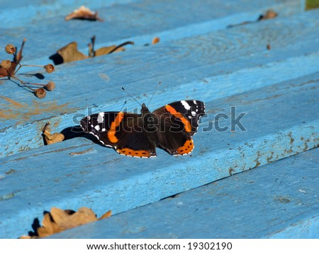 Butterfly on blue bench in an autumn park - stock photo